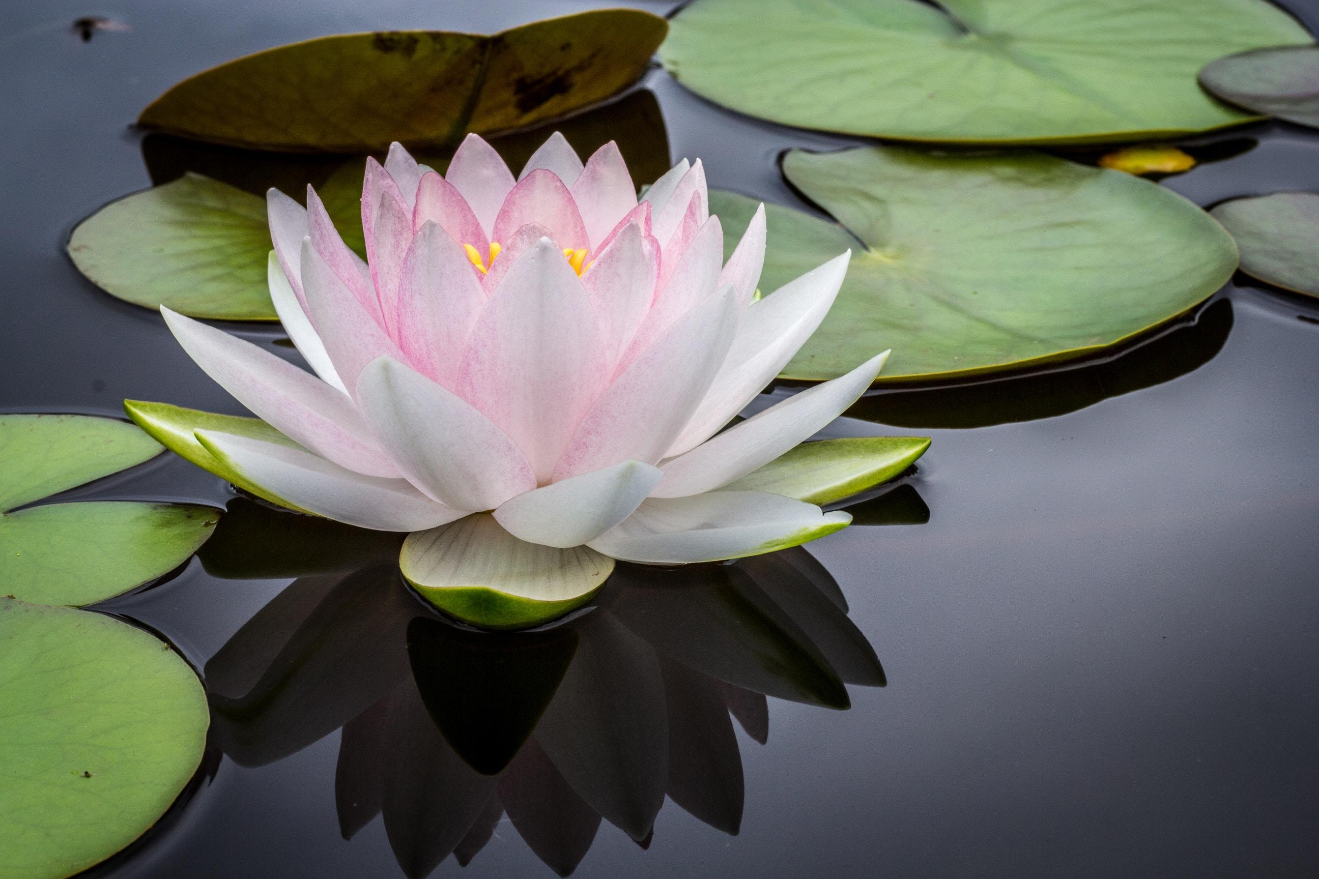 Mindfulness kursus i hele landet - Lær alt om mindfulness med et kursus