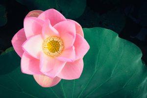 mindfulness kursus roskilde